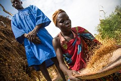 Cleaning dried sesame (FAOemergencies) Tags: fao food agriculture crops cultivation cultivators farmers farming fish foodsecurity sorghum aweil northernbahralgazal southsudan emergencies africa resilience groundnuts