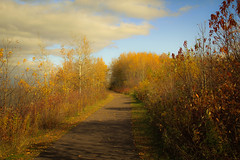 autumn in the shorelands.....explored... (A. Wrench) Tags: lakesuperior shore trail woods autumn clouds footpath fallcolors wisconsin ashlandwi tree trees leaves sky nature landscape shadows fall gitchigami northland
