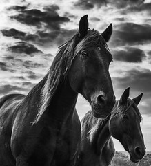 Two Souls (mexou) Tags: horses bw luxembourg sky