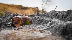 post industrial (2) (grahamrobb888) Tags: nikon nikond800 nikkor50mmf18 birnamwood perthshire scotland autumn frost forest forestry footpath track bokeh