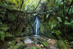 IMG_3327 (Schlueter1992) Tags: neuseeland2016urlaub abeltasmannationalpark tasman neuseeland