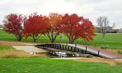 Landscape with bridge (ali eminov) Tags: outdoors wayne nebraska golfcourses waynegolfcourse seasons fall colors trees bridges landscapes
