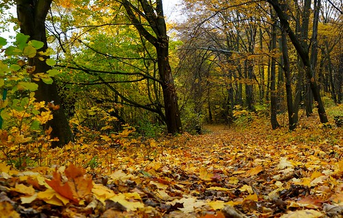 Autumn Forest - Krakow, Poland