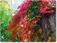 Colorful days in October-Októberi színek (Katalin Réz) Tags: autumn ősz concordians autofocus lovelymotherearth fleursetpaysages