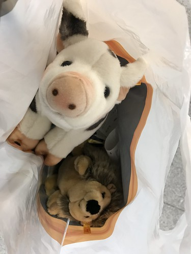 A little stuffed pig and a hedgehog will stowaway in my bags in Munich on their way to go to the twins back home