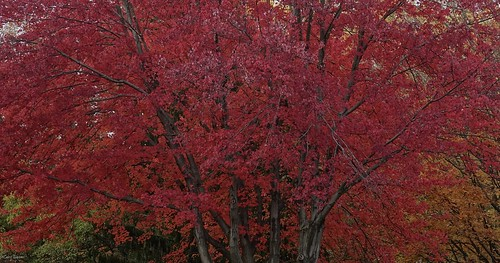 """REDDISH • <a style=""""font-size:0.8em;"""" href=""""http://www.flickr.com/photos/52364684@N03/30870346426/"""" target=""""_blank"""">View on Flickr</a>"""