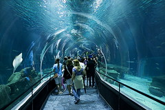AquaRio, The largest Marine Aquarium in South America, Rio de Janeiro. (Carlos Vieira.) Tags: aquario aquarius fish riodejaneiro underwater