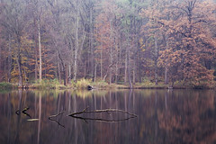Autumn at the lake (derkleinebiber) Tags: autumn autumnal lake lakeside lakes lakescape seascape see seenlandschaft seen brandenburg naturpark naturschutzgebiet groser tornowsee märkischeschweiz landscape herbst herbstlich forest wald mixedforest wälder benjjjamin home