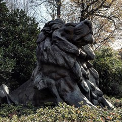 #lion #washingtonzoo #washingtondc #sculptor