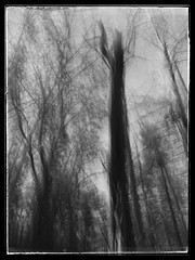 Woods (GR167) Tags: slowshutterapp iphoneography iphoneart bw iphone slowshutter