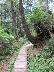 Schooner Cove Trail (Perkules) Tags: britishcolumbia trails vancouverisland tofino hikes pacificrimnationalparkreserve schoonercovetrail