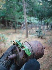 Rebirth (reclaimednj) Tags: fern green trash forest nj litter filter pinelands fuel pinebarrens regrowth 2015 fuelfilter bassriverstateforest nationalpubliclandsday vsco