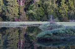 Elgin Heritage Park (careth@2012) Tags: reflection reflections landscape scenery view britishcolumbia scenic scene
