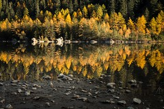 fireworks (zedipedi) Tags: autumn lake nature forest canon mirror golden colorful stones herbst larch wallis valais lärche 2470 derborance