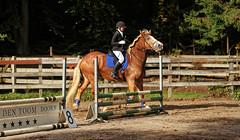 Doorn (Steenvoorde Leen - 3.4 ml views) Tags: doorn manegedentoom arreche paarden springen horses jumping hindernis fench sport outdoor manege 2015 halloween happyhalloween horse pferd reiten paard pferde haloween utrechtseheuvelrug cheval