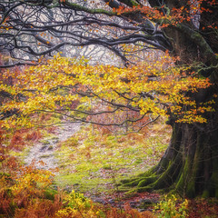 Through the Rain (Vemsteroo) Tags: travel autumn tree fall nature wet beautiful rain weather forest canon woodland woods colours exploring lakedistrict glorious cumbria ethereal bloom floods nofilter 6d 70200mm sqaure thirlmere visitengland visitbritain