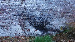 ROA / Terneuzenlaan - 14 nov 2015 (Ferdinand 'Ferre' Feys) Tags: streetart graffiti belgium belgique belgië urbanart graff ghent gent gand graffitiart roa arteurbano artdelarue urbanarte