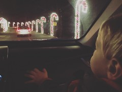 Brock at the Roper Mountain Holiday Lights (jackie.moonlight) Tags: mountain holiday sc lights center science greenville roper 2015