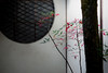 Murinan,無鄰菴--Kyoto (gasdust) Tags: kyoto sony 京都 紅葉 冬 carlzeiss murinan a99 無鄰菴 sal135f18za slta99v