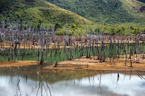 New Caledonia - Parc Provincial Rivière bleue - Foret Noire/Noyee