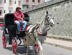 Horse Carriage in Cuba (shaire productions) Tags: building exterior downtown city urban image picture photo photograph travel photography traveler world cuba havana oldhavana district cuban design horse carriage transportation