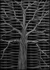 Tree (jolom) Tags: tree stillife bw abstract minimalism geometric monochrome blackandwhite treeoflife