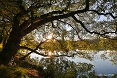 Rflexions (oncle_john) Tags: automne fall arbre tree feuille parc ttedor lyon france eau reflexion soleil onclejohn canon 5d mark3 5d3 mk3 momentsdecapture