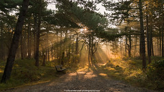 Good morning!! (robvanderwaal) Tags: landscape natuur zonnestraal autumn sunbeams bench oranjezon boom nederland bomen 2016 bos rvdwaal herfst forrest trees robvanderwaalphotographycom licht zonnestralen tree light ochtendgloren nature ochtend morninglight sunbeam landschap bankje morning netherlands zeeland