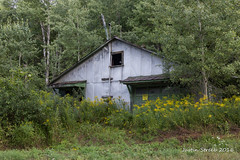 Wellsville Shed -1 (strjustin) Tags: wellsville newyork upstate abandoned landscape canon canon60d flowers oldstuff