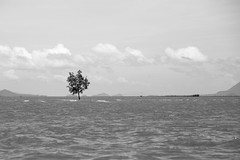The Lone Tree (virtualwayfarer) Tags: thai thailand visitthailand asia southeastasia water hightide lonetree estuary bay shallowwater alone isolated standingstrong resilient mangroveswamp krabi ferry southernthailand sea ocean travel traveling travelphotography thingstosee visittothailand canon canon6d travelphotographer travelinspiration lifestyleinspiration