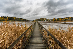 Fall at the Neverending pier (Normann Photography) Tags: brnnya autumn fall lines lowtide molo nature orange perspective pier seasons water akershus norway no