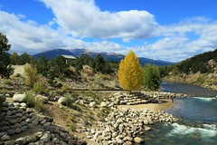 Along the Arkansas River (Patricia Henschen) Tags: mountains buenavista colorado park whitewater town grade midland arkansasriver arkansas river valley collegiatepeaks sawatch range rocky clouds autumn fall fallcolors leafpeeping chaffeecounty