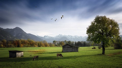 2016-10-25-01 (wolfgang.urnau) Tags: landschaft herbst wiese bayern