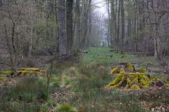 ckuchem-0254 (christine_kuchem) Tags: asthaufen baumrinde bäume eiche hainbuche haufen pflanzen schutz tiere unterschlupf wald wildnis wildtiere winter winterschlaf naturnah natürlich äste