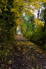 Herbst (shortscale) Tags: baum herbst laub feldweg smcpentaxm11750mm