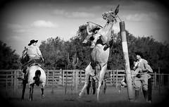 Junto ao palanque (Eduardo Amorim) Tags: gaúcho gaúchos gaucho gauchos cavalos caballos horses chevaux cavalli pferde caballo horse cheval cavallo pferd crioulo criollo crioulos criollos cavalocrioulo cavaloscrioulos caballocriollo caballoscriollos pampa campanha fronteira bagé riograndedosul brésil brasil sudamérica südamerika suramérica américadosul southamerica amériquedusud americameridionale américadelsur americadelsud cavalo 馬 حصان 马 лошадь ঘোড়া 말 סוס ม้า häst hest hevonen άλογο brazil eduardoamorim gineteada jineteada
