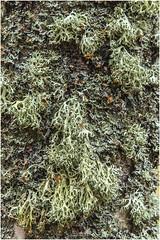 Bark2 (Jistfoties) Tags: dawyckgardens autumn scottishborders botanicgardens landscape canon5d canon24105f4