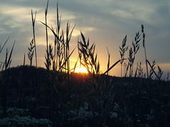 When the sun goes down (katabalog) Tags: lifegoals photographyismylife photography nikon nikond3100 naturephotography beautifulnature liveauthentic letstakeawalk sunset sun nature magicmoments