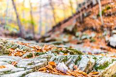 Hilton Area (11-10-16)-065 (nickatkins) Tags: fall fallcolors fallcolor fallfoliage autumn water sun sunlight stream