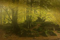 Luz entre la niebla. (PILIRUBIO) Tags: ltytr1