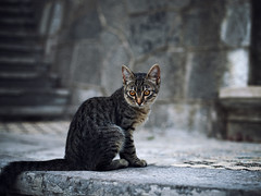 Street cat 171 (Yalitas) Tags: cat cats    kedi chat feline kat katze katzen kot kotka pet felino kottur katte kass kitty gato kocka gatta katzchen canon streetcat kitten ktzchen  youngcat