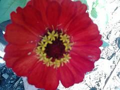DSC_0016 (Jozef rulof) Tags: roluf jozef jose flor vermelho redgente familia caminhos passeio espiritual jozefrulof