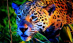 Focus ! (gshaun12) Tags: cat art animals nature fantasticnature macro macrodreams wildlife