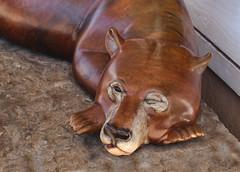 Snoozing Bear (Helen Orozco) Tags: wood polished santefe bear canonrebelsl1 memories gulp