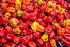 0534 Red Hot Chili Peppers (Domenico Durastante) Tags: palermo sicilia habanero peperoncini ballarò mercato texture