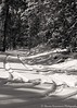 shapes of black and white (stavros karamanis) Tags: snow road tree forest outdoor nature landscape landscapephotography blacknwhite blackandwhite canonphotography canonusers canon t3i ef35350mmf3556lusm troodos cyprus ngc