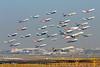 Mumbai Airport : Where Dreams Take Flight (Dak5755) Tags: planespotting mumbai airport csia avgeek flight airbus boeing india aviation photography composite travel journey fly flights takeoff boeing777 a320 a321 a319 b777 b737 emirates jetairways indigo goair airindia airindiaexpress fedex md11 md11f cargo passenger etihad vistara canon winter