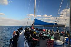 En route pour la Grande Barrière de Corail