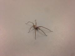 273/365 Spider