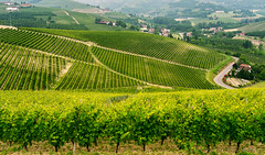Landscape in Langhe (Piedmont) (clodio61) Tags: road summer sky italy plant color tree green nature field rural landscape photography italian europe day exterior wine alba outdoor country hill scenic vine sunny nobody vineyards land agriculture cuneo piedmont langhe asti